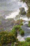 Waterval Iguacu Stock Afbeelding