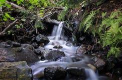 Waterval - Kikker Royalty-vrije Stock Afbeeldingen