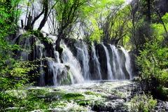 Waterval met glashelder water onder groen hout, Jiuzhaigou stock afbeelding