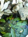 Waterval met vijver en vijverlelies Royalty-vrije Stock Afbeelding