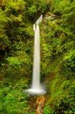 Waterval in Nieuw Zeeland Stock Afbeelding