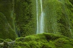 Waterval op bemoste achtergrond Royalty-vrije Stock Afbeelding