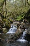 Waterval op Rivier ENIG Stock Afbeelding