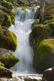 Waterval in Plitvicka Jezera - Plitvice Stock Foto