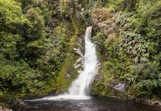 Waterval in regenwoud in Nieuw Zeeland royalty-vrije stock afbeeldingen