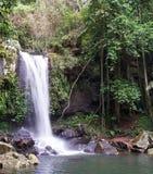 Waterval Springbrook Nationalpark stock foto