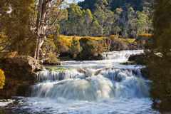 Waterval in Tasmanige stock foto's