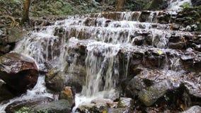 Waterval in tropisch bos stock videobeelden
