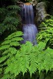 Waterval in tropische tuin Stock Afbeeldingen