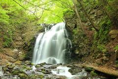 Waterval van verse groen Royalty-vrije Stock Foto's