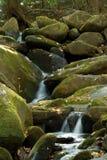 Waterval in weelderig de herfsthout stock foto's