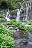 Waterval in wildernis Stock Foto