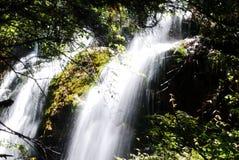 Watervallen in bossen royalty-vrije stock fotografie