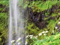 Watervallen en bloemen Royalty-vrije Stock Foto