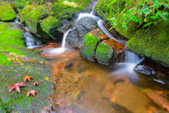 Watervallen en esdoornblad in Phu Soi Dao Uttaradit Royalty-vrije Stock Foto