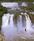 Watervallen en vogels Stock Foto