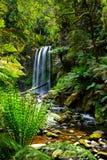 Watervallen in het bos Stock Foto's