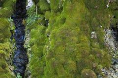 Watervallen met groen mos worden behandeld dat Royalty-vrije Stock Fotografie