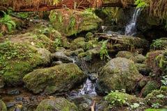 Watervallen op een rotsachtige stroom Stock Afbeeldingen