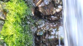 Watervalmos Royalty-vrije Stock Afbeeldingen