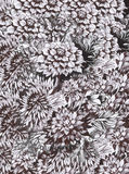Waterverf abstracte bloemenachtergrond met kleurrijke mooie bloemen Stock Afbeeldingen