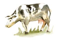 Waterverf bevlekte koe op witte achtergrond Stock Afbeelding