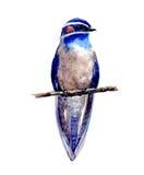 Waterverf blauwe vogel Stock Afbeelding