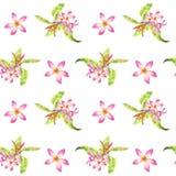 Waterverf bloemen tropisch naadloos patroon met groene monsterabladeren en roze plumeriabloemen op wit royalty-vrije illustratie