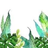 Waterverf Bloemenachtergrond met Tropische bladeren Royalty-vrije Stock Afbeeldingen