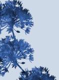 Waterverf bloemenachtergrond voor ontwerp Stock Fotografie