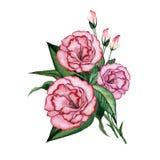 Waterverf bloemenboeket Stock Fotografie