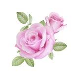 Waterverf bloemenboeket van rozen Royalty-vrije Stock Foto's
