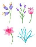 Waterverf bloemenelementen voor ontwerp Royalty-vrije Stock Afbeeldingen
