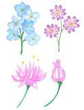Waterverf bloemenelementen voor ontwerp Stock Fotografie