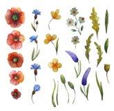 Waterverf bloemenillustratie royalty-vrije illustratie