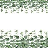 Waterverf bloemenkroon met eucalyptus, de bladeren van de babyeucalyptus en pioenbloemen De hand schilderde bloemengrens met takk Royalty-vrije Stock Foto