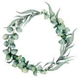 Waterverf bloemenkroon met verschillende eucalyptusbladeren Hand geschilderde kroon met babyblauw, siver dollareucalyptus stock illustratie
