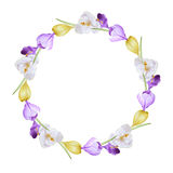 Waterverf bloemenkroon van krokussen Royalty-vrije Stock Foto's