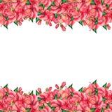 Waterverf bloemensamenstelling Royalty-vrije Stock Foto's