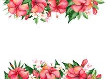 Waterverf bloemensamenstelling Royalty-vrije Stock Afbeelding