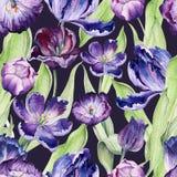 Waterverf bloementulp backgraund Naadloos kleurrijk de lentepatroon Installatie van de Watercolour de violette tulp Purpere bloes royalty-vrije illustratie
