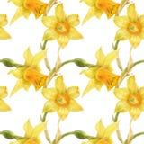Waterverf botanisch realistisch bloemenpatroon met narcissen stock foto