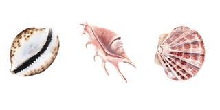 waterverf die met shells wordt geplaatst die op wit wordt geïsoleerd stock illustratie