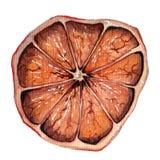 Waterverf droge sinaasappel Stock Foto