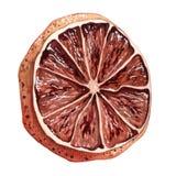Waterverf droge sinaasappel Stock Foto's