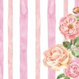 Waterverf gevoelige Engelse rozen op roze gestreepte textuur Witte achtergrond met roze strepen en tuinbloemen in vinatgestijl royalty-vrije illustratie