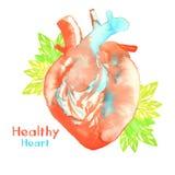 Waterverf gezond hart royalty-vrije illustratie