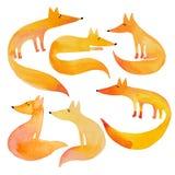 Waterverf grappige vossen op witte achtergrond Stock Afbeelding