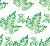 Waterverf groen blad Royalty-vrije Stock Afbeelding
