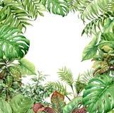 Waterverf groene achtergrond met tropische installaties royalty-vrije illustratie
